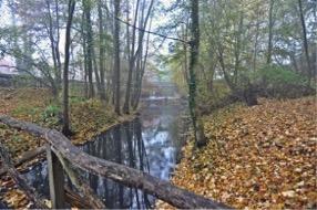 Herbstliche Bachlandschaft