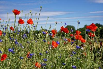 Farbige Blumenwiese