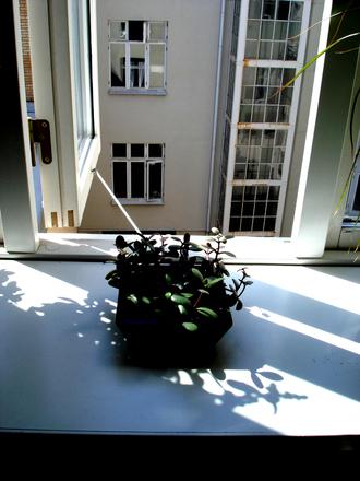 Pflanze auf dem Fenstersims mit Blick auf eine Hinterhausfassade