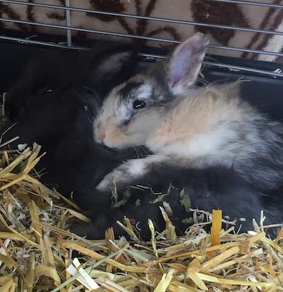 Zwei Kanninchen
