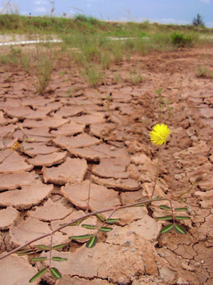 Erodierter Boden mit gelber Blume