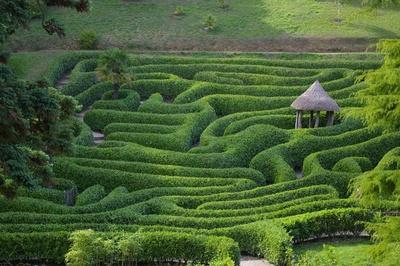 Labyrinth aus Büschen