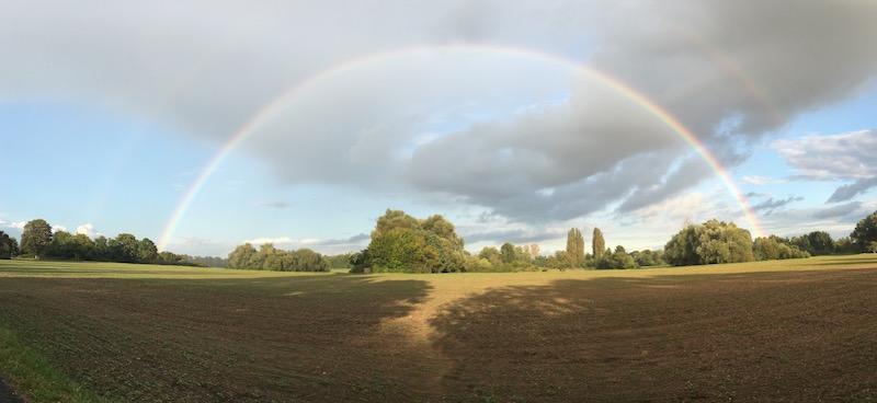 Regenbogen über Feld und Bäumen