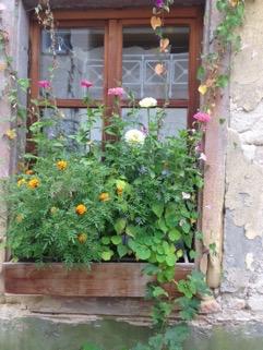 Fenster mit herbstlichen Blumen
