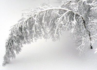 Schnee im April auf einem Ast