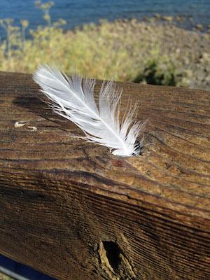 Weisse Feder auf einem Baumstamm