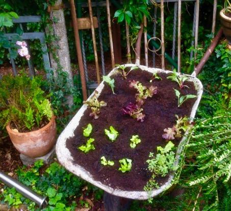 Bepflanzter Schubkarren