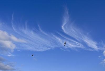 Blauer Himmel mit segelnden Vögeln