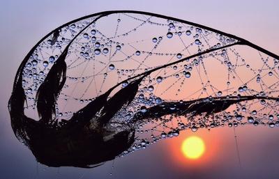 Oktobermorgen, Sonnenaufgang mit Wassertropfennetz an einem Ast