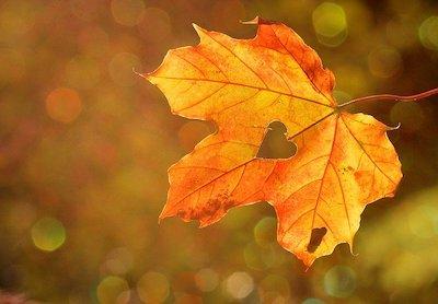 Herbstblatt mit Herz